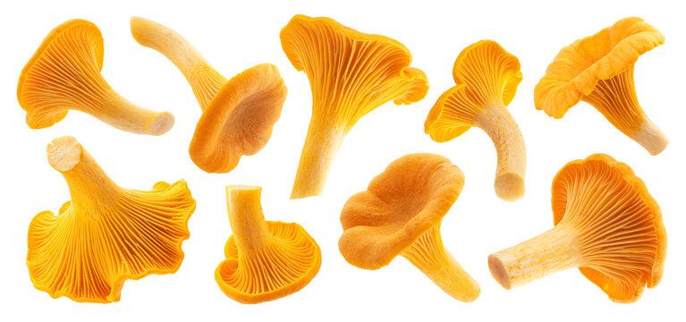 Fresh chanterelle mushrooms isolated on white background