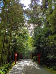 Hakone Forest Path