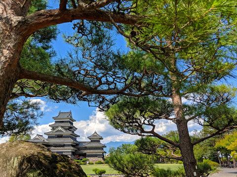 Matsumoto Castle through the Trees