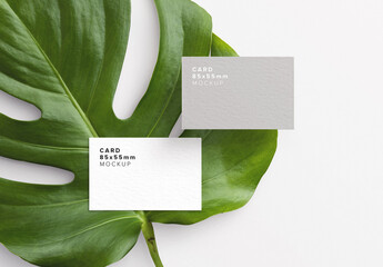 Business Card Monstera Plant