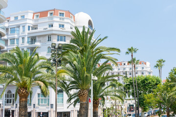 Palm trees on the Boulevard Croisette in Cannes