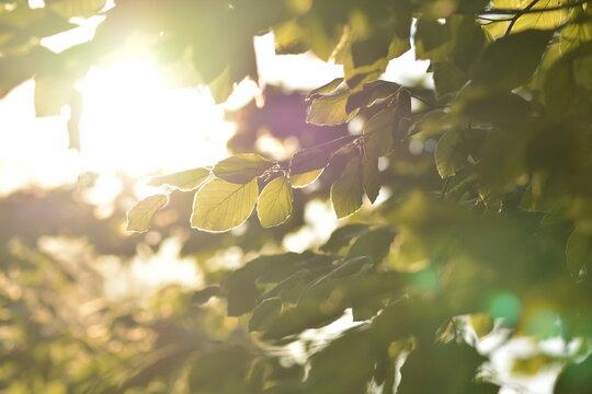 Sonnenstrahlen fallen durch das Blätterdach