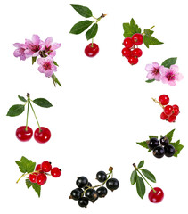Fototapete - Cherry and currant  isolated on white background