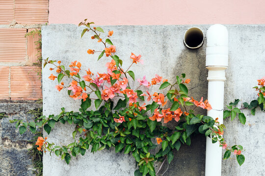 Wall Covered By Flowered Plant.
