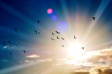 Foto op Canvas Vogel silhouette of a flock of flying birds