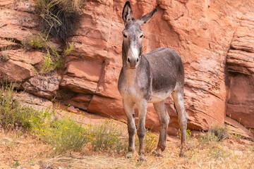 Donkey Standing In A Field