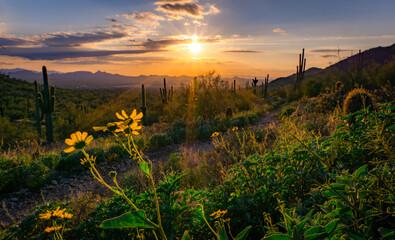 Desert Field Against Sky During Sunset