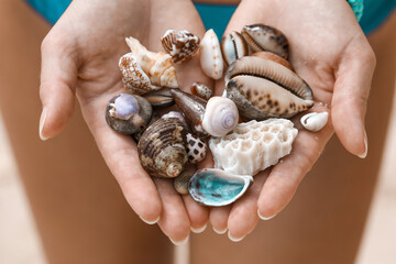 Obraz Close-up Of Hand Holding Shells - fototapety do salonu