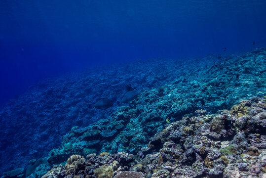 海洋底に続くサンゴ礁の斜面。ブルーバック。ミクロネシア連邦ヤップ島