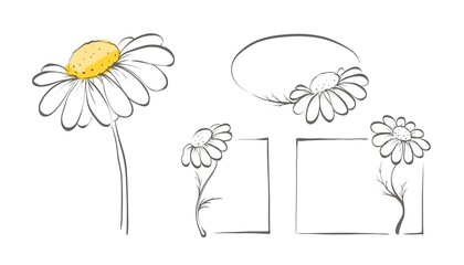 Decorative daisies. Set vector design elements, frame of chamomile.