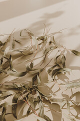 Dry green leaves on beige background with sunlight shadows silhouette.