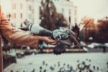 Cropped shot of beautiful woman feeding pigeons from hands.