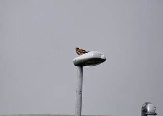 Fotomurales - Low Angle View Of Bird Perching Against Clear Sky On Lamp Post
