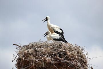 summer houses of the stork family