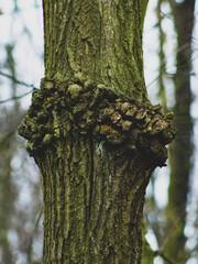 Fragment jesiennego lasu