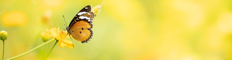 Nature of butterfly and flower in garden using as background butterflies day cover page or banner template brochure landing page wallpaper design
