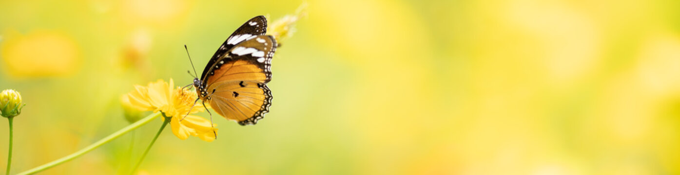Nature of butterfly in garden using as background butterflies day cover page