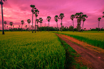Tuinposter Candy roze A close up view of a green rice field And surrounded by various species of trees, seen in scenic spots or rural tourism routes, livelihoods for farmers