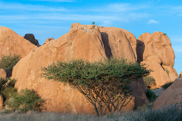 Granite boulders and a tree at the greater Spitzkoppe
