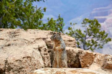 Door stickers Squirrel Grand Canyon National Park Eekhoorn met uitzicht
