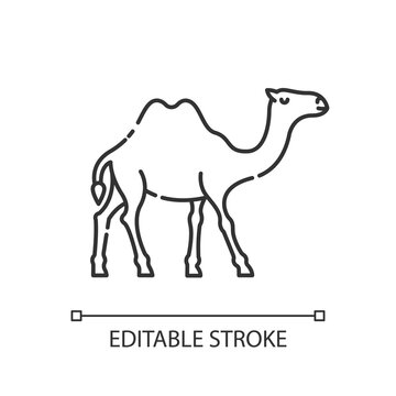 Camel pixel perfect linear icon. Exotic wildlife, wilderness inhabitant thin line customizable illustration. Contour symbol. Two humped camel vector isolated outline drawing. Editable stroke