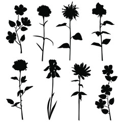 Set of silhouette flowers rose, Daisy, chamomile, carnation, Apple or cherry branch, spring-summer forest and garden field flower, black color isolated on a white background