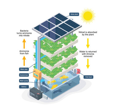 aquaponic system smart farming isometric