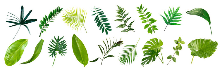set of green monstera palm banana and tropical plant leaf on white background for design elements, Flat layd.clipping path