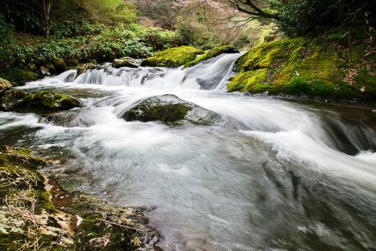 竜頭八重滝県立自然公園の美しい清流(島根県)