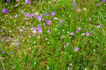 Blumenwiese mit Wiesenkräutern