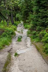 ein romantischer Waldweg mit seinen und felsen im Gebirge