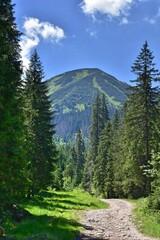 Szlak Papieski w Tatrach Zachodnich. Żółty szlak w Dolinie Chochołowskiej