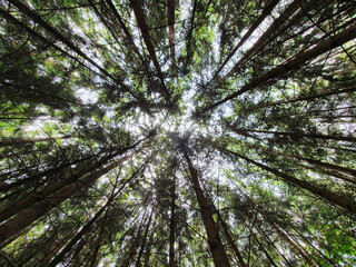 Photo sur Plexiglas Nature trees in the forest