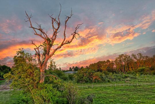Wetlands in Nature Reserve Esteros del Ibera National Park, Colonia Carlos Pellegrini, Corrientes, Argentina.