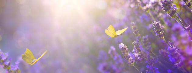 Foto op Canvas Natuur Art Summer floral landscape; beautiful summer lavender flower and fly butterfly against evening sunny sky; nature landscape background.