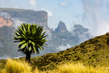 Spectacular landscape of green tree growing on hill on background of rough mountains in Africa
