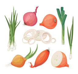 Onion, shallot, leek vector icon set. Cartoon drawings of raw vegetables, isolated graphic elements for packaging, menu.