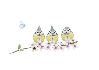 cute hand drawn illustration of three blue tits with birthday party hat and bow tie, on branch with pink blossom, bumblebee and butterfly, isolated on white background