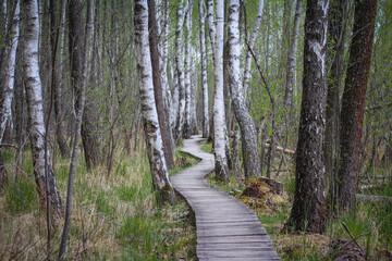 Obraz Poleski Park Narodowy, ścieżka Spławy - fototapety do salonu