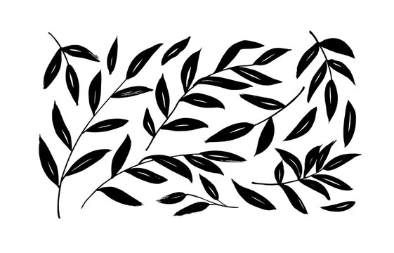 Brush branches with long leaves vector collection. Set of black silhouettes leaves and branches. Hand drawn eucalyptus foliage, herbs, tree twig. Vector ink elements isolated on white background.