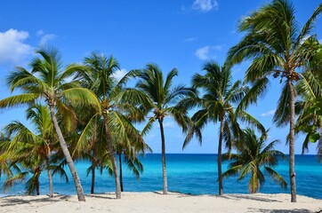 Palm trees on Varadero beach in Cuba, white sand, turquoise caribbean sea in the background, blue sky, a sunny day