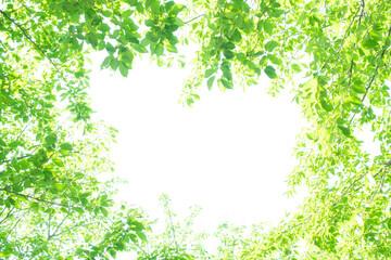 초록잎과 하늘 Fotobehang