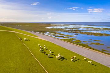 Wall Mural - Aerial view sea dike with sheep Waddensea