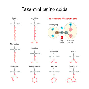 Essential amino acid or indispensable amino acid. chemical structural formula