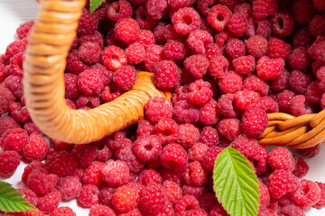 Fresh forest raspberries scattered on the table from an overturned wicker basket, close-up