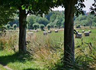Bäume vor Getreidefeld mit Heuballen