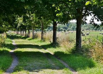 Weg durch Feld und WIesen