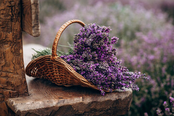 Wicker basket of freshly cut lavender flowers on a natural wooden bench among a field of lavender...