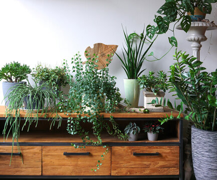 Different indoor plants in living room with decorations on the table Stylish composition of home garden green industrial interior. Urban jungle interior with houseplants. green concept for magazine.