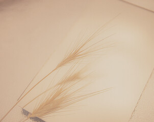 feather on the wind